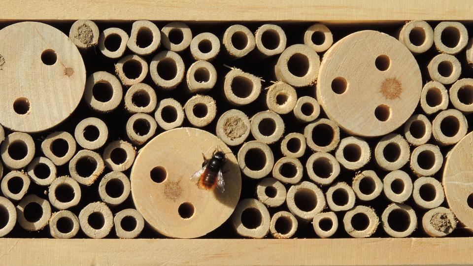 Workshop für Kinder und Jugendliche: Einladung ins Insektenhotel